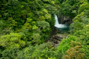 新緑と竜神の滝の写真素材 [FYI01745190]