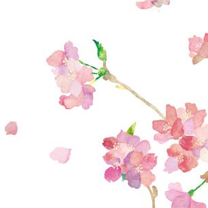 sakuraのイラスト素材 [FYI01745493]