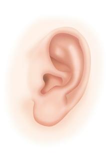 耳 イラストのイラスト素材 [FYI01745535]