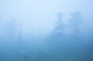 霧の瓶ヶ森の写真素材 [FYI01745955]