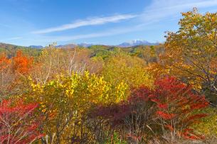 萱野高原の紅葉の写真素材 [FYI01745968]