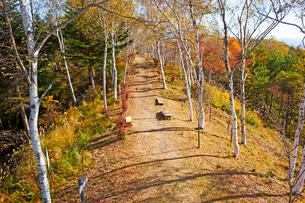 萱野高原の道と紅葉の写真素材 [FYI01745979]
