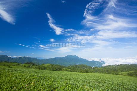 石鎚山の写真素材 [FYI01745994]