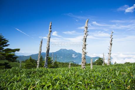 瓶ヶ森より石鎚山の写真素材 [FYI01746019]