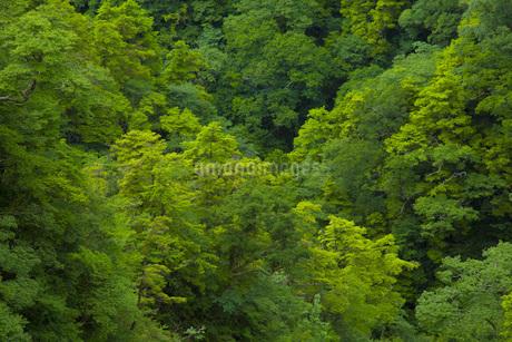 渓谷の樹木の写真素材 [FYI01746028]