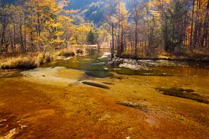 秋の上高地田代池の写真素材 [FYI01746039]