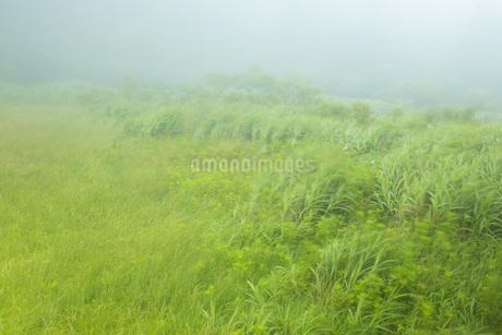 霧の風景の写真素材 [FYI01746078]