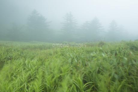 霧の風景の写真素材 [FYI01746082]