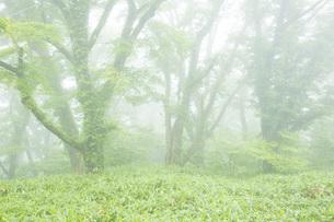 霧の風景の写真素材 [FYI01746189]