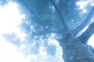 霧の瓶ヶ森の写真素材 [FYI01746269]