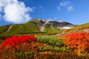 ナナカマドの紅葉と乗鞍岳と雲の写真素材 [FYI01746280]