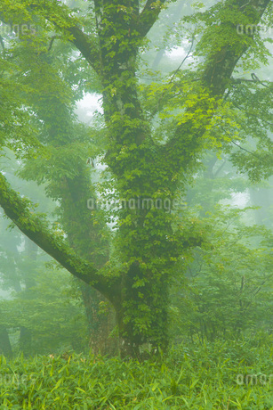 霧の風景の写真素材 [FYI01746302]