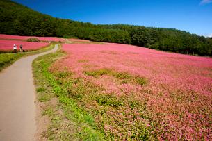 信州伊那高原みのわの赤そばの里の道の写真素材 [FYI01746306]