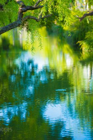 倉敷美観地区 倉敷川の水面の写真素材 [FYI01746339]