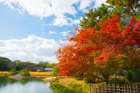 秋の後楽園の写真素材 [FYI01746442]