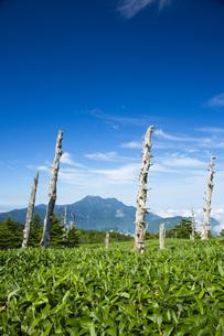 瓶ヶ森より石鎚山の写真素材 [FYI01746463]