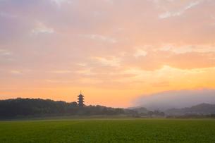 備中国分寺の朝の写真素材 [FYI01746714]
