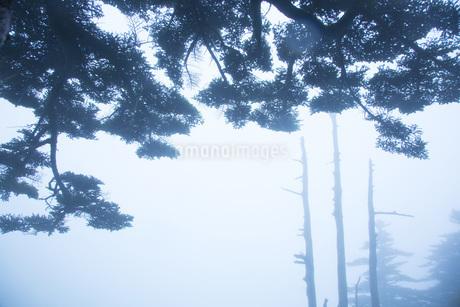 霧の瓶ヶ森の写真素材 [FYI01746844]