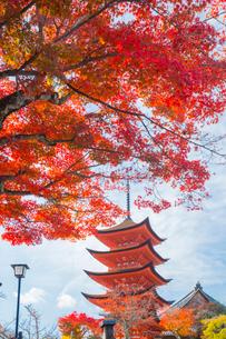 秋の五重塔の写真素材 [FYI01747032]