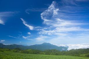 石鎚山の写真素材 [FYI01747051]