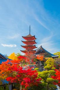 秋の五重塔の写真素材 [FYI01747093]