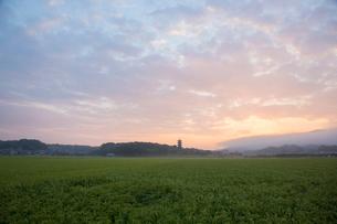 備中国分寺の朝の写真素材 [FYI01747096]