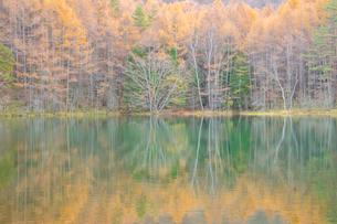 晩秋の雑木林と御射鹿池の写真素材 [FYI01747212]