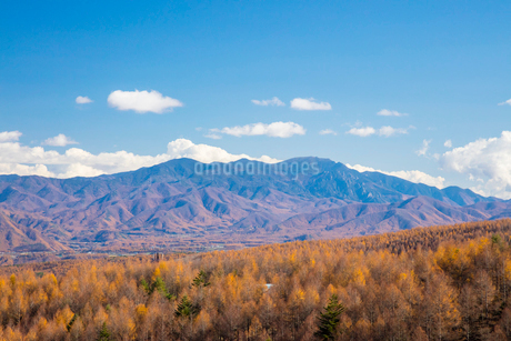 カラマツ林と秩父山地の写真素材 [FYI01747223]