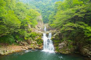 春の三段峡の写真素材 [FYI01747229]