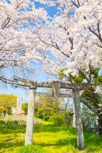 山県有朋誕生地にて厳島神社の鳥居の写真素材 [FYI01747235]