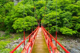 長門峡の紅葉橋と新緑の写真素材 [FYI01747329]