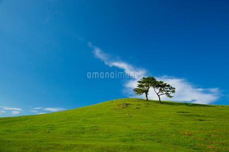 青空と丘の木の写真素材 [FYI01747427]