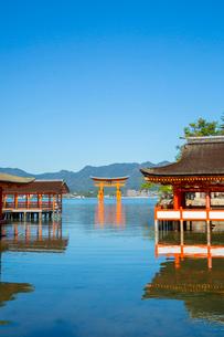 厳島神社回廊と大鳥居の写真素材 [FYI01747511]