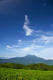 石鎚山の写真素材 [FYI01747519]