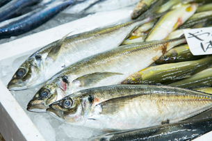 瀬戸の魚介類の写真素材 [FYI01747620]