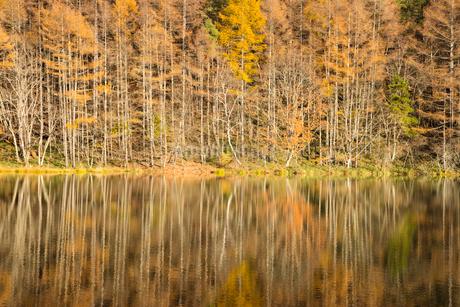 晩秋の雑木林と御射鹿池の写真素材 [FYI01747682]
