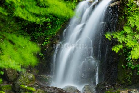 新緑の滝の写真素材 [FYI01747744]