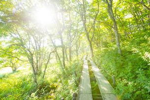 八島ヶ原湿原の遊歩道の写真素材 [FYI01747822]