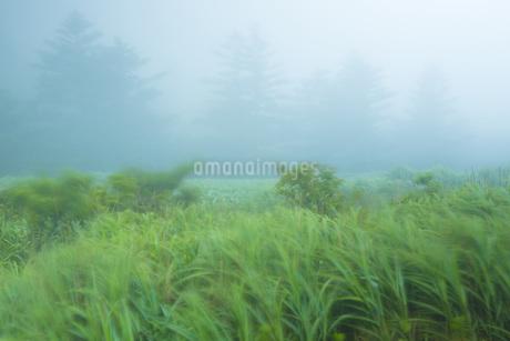 霧の風景の写真素材 [FYI01747843]