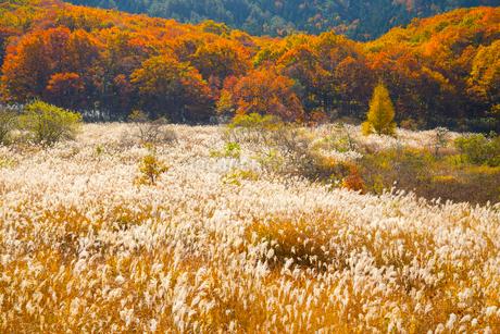 恩原高原の紅葉とススキの写真素材 [FYI01747925]