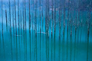 深い森が沈んだ自然湖の写真素材 [FYI01748116]