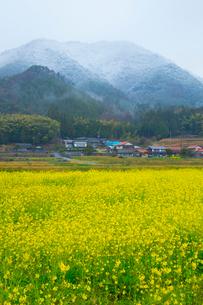 農村の春の写真素材 [FYI01748362]