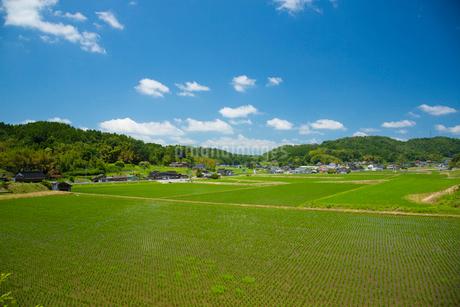 田植え後の田園風景の写真素材 [FYI01748391]