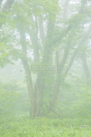 霧の風景の写真素材 [FYI01748433]