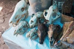イキトスの市場の写真素材 [FYI01748540]
