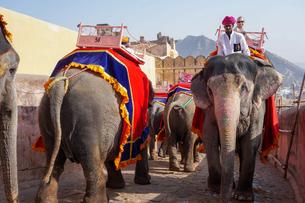 インド ゾウのタクシーの写真素材 [FYI01748660]
