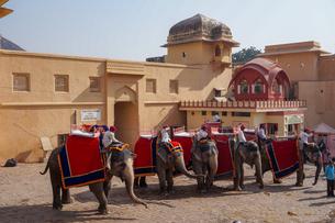 インド ゾウのタクシーの写真素材 [FYI01748661]