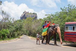 スリランカ シーギリヤ・ロックの象タクシーの写真素材 [FYI01748669]