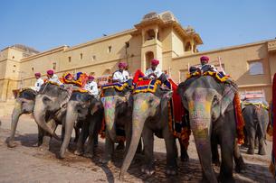 インド ゾウのタクシーの写真素材 [FYI01748683]