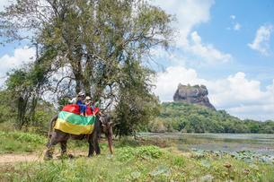 スリランカ シーギリヤ・ロックの象タクシーの写真素材 [FYI01748686]